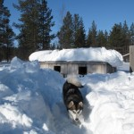 There's plenty of snow - we had to shovel our way into the kennels yesterday.