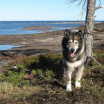 Thunder is a perfect trail companion - focused on his job and relaxed during breaks.
