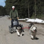 Leia (black & white) is a strong girl who works well both in wheel and in lead.