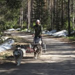 We have a nice forest trail near home which is ideal for carting and biking.