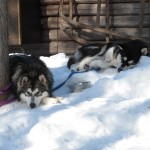Xion and Kiska, owned by Sara and James Barstow.