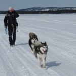 A walk on the ice with two happy pups.