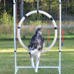 Sledog Dream Leaper lives up to her name ;)