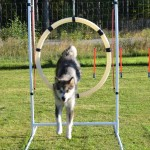 Hilary is a natural jumper. She clears all the jumps in agility and the puppy gates in our house too..;)