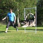 Leia flies across each jump - she is a very agile Malamute.