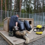 August is a good time to clean the dog houses properly, before the temperature drops below zero.