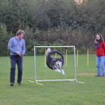 Hilary tries the tyre jump at agility class.