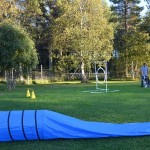 Our small agility course at home. We've worked hard trimming the grass this summer.