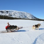 Notice the giant snow anchor? There's plenty of power even in a small two-dog Malamute team.