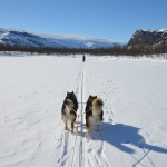 Skijoring into the Rapa River delta.