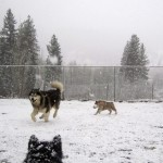 April snow at Mountain Home -puppies having fun with Skipper