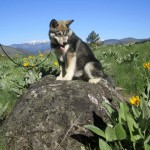 On top of a rock, at 4 months of age.