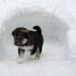 Wilder coming out from his igloo.