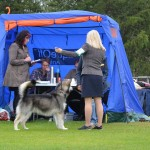 At the Arctic Circle Dog Show, August 2013.