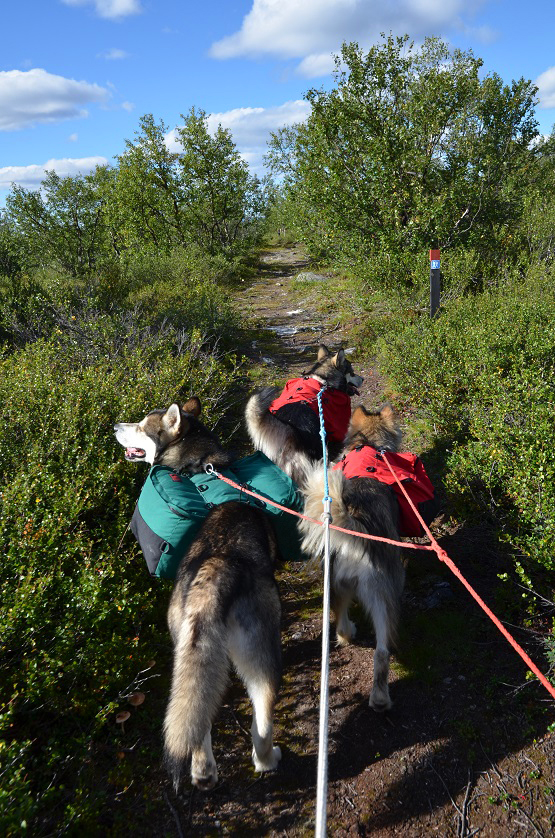 Trio-on-the-trail