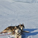 The Sledog kids in the snow.