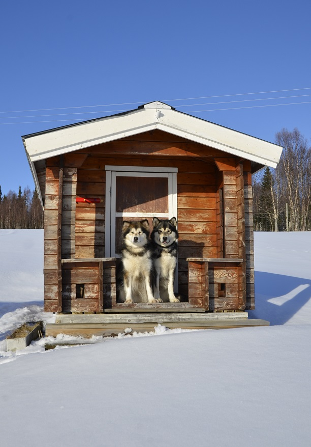 Hilary and Wilder found a cabin of their own.